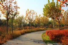 jesień drzewa Zdjęcie Royalty Free