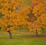jesień drzewa Fotografia Royalty Free