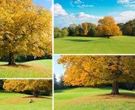 Jesień drzewa set Fotografia Stock