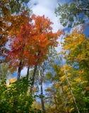 Jesień drzewnego baldachimu widok. Obrazy Royalty Free