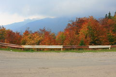 jesień drzewo obraz stock