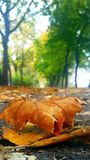 Jesień duch Fotografia Stock