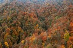 Jesień dywan Obraz Stock