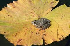 jesień dzień jezioro pogodny Zdjęcia Royalty Free