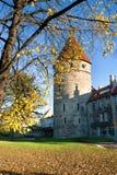 jesień Estonia Tallinn Obrazy Royalty Free