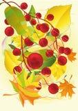 jesień etiuda Zdjęcie Stock
