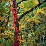 jesień farby Obrazy Royalty Free