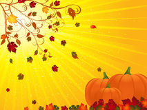 jesień floruish krajobrazu banie Zdjęcia Stock