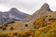 Jesień, góra, Montenegro, las Zdjęcia Royalty Free