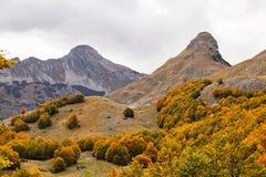 Jesień, góra, Montenegro, las Obraz Royalty Free