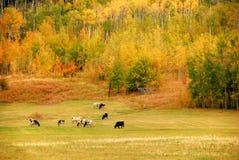 jesień góry Obraz Stock