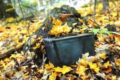 Jesień Geocaching Fotografia Stock