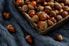 Jesień i acorns w koszu Zdjęcia Royalty Free