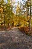 Jesień i jaskrawi kolory Zdjęcia Stock