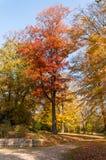 Jesień i jaskrawi kolory Obraz Stock