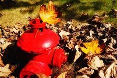 Jesień i liść Obrazy Royalty Free