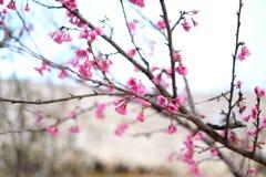 Jesień i wiosna Obraz Stock