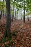 jesień iv Zdjęcie Royalty Free