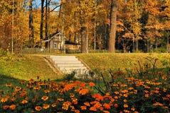 Jesień jaskrawy kwiaty Obraz Stock