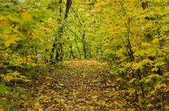 Jesień jaskrawy las Zdjęcie Royalty Free