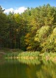 jesień jeziora sosny Zdjęcie Royalty Free