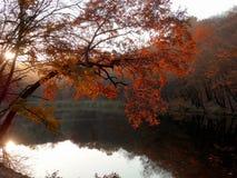 Jesień jezioro drewna Zdjęcie Royalty Free