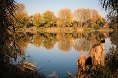 Jesień jezioro z drzewami Obrazy Royalty Free