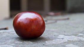 Jesień kasztan Obraz Stock