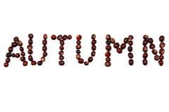 jesień kasztany Zdjęcie Stock
