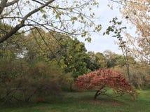Jesień klimaty Obrazy Royalty Free