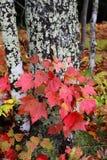 jesień kolorów spadek Obrazy Royalty Free