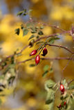 jesień kolor Fotografia Royalty Free