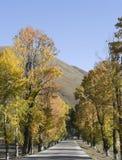 jesień kolor Zdjęcia Royalty Free