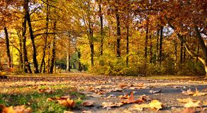 Jesień kolor Fotografia Stock