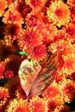 Jesień kolor Obraz Royalty Free