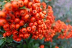 Jesień kolor Zdjęcie Stock