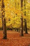 jesień kolorowa Obraz Stock