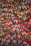 jesień kolory Obrazy Royalty Free