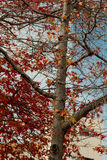Jesień kolory Fotografia Royalty Free