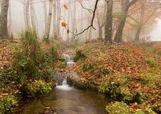 jesień kolory zdjęcia royalty free
