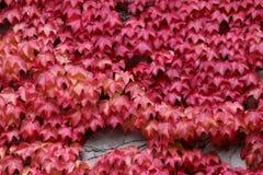 Jesień kolory; czerwony chodnik Obraz Royalty Free
