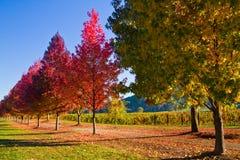 Jesień kolory - drzewa Zdjęcia Royalty Free