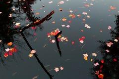 Jesień kolory na spokojnej wodzie Obrazy Royalty Free