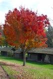 Jesień kolory - Walla Walla, WA Fotografia Royalty Free