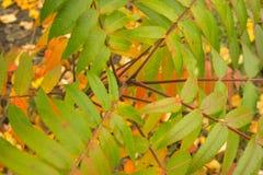 Jesień kontrast Zdjęcie Stock