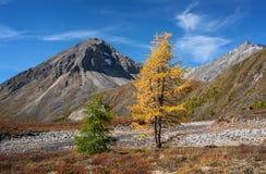 Jesień kontrasty Zdjęcia Royalty Free