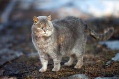 Jesień kot Zdjęcia Royalty Free