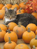 Jesień kot Obrazy Royalty Free