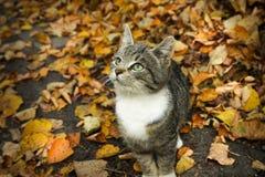 Jesień kot Obrazy Stock