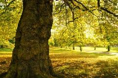 Jesień krajobraz Obraz Stock